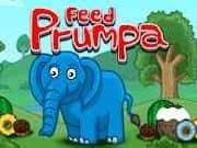 Juego Feed Prumpa Elefante